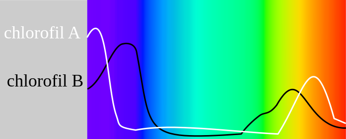 Chlorophyll absorption over the visible light spectrum (click on the image for more details)